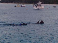 Wenn Pferde schwimmen gehen müssen