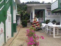 Weihnachtsbaum in Charlotteville/Tobago