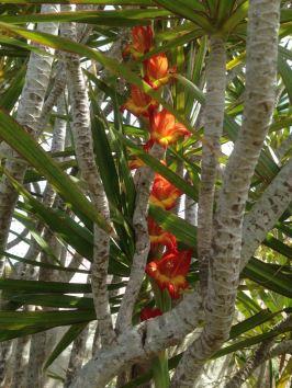 Die Blüten haben sich in den Baum geschliechen